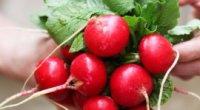 Корисні властивості редиски на вашій кухні