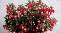 Вибираємо корисні квіти для дому, які приносять удачу, багатство і добробут