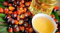 Пальмова олія: з чого виробляють продукт?