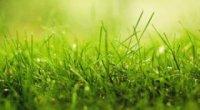Приснилася трава