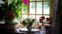 Невибагливі кімнатні квіти, що цвітуть круглий рік