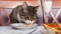 Як відучити кішку лазити по столах?