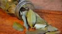 Лавровий лист від алергії: лікування в домашніх умовах