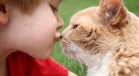 Чи передається людині лишай від кішок?