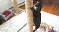 Як привчити кішку точити кігті у певному місці?