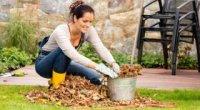 Осіння підготовка саду до зими