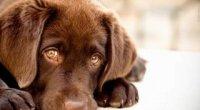 Таблетки від глистів для собак