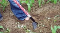 Як позбутися від бур'янів і трави назавжди