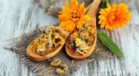 Жіночі трави – допомога при гінекологічних захворюваннях