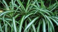 Тіньолюбні кімнатні рослини: назви та фото