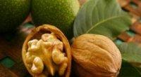 Масло волоського горіха: корисні властивості і застосування