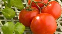 Томати: кращі сорти для відкритого грунту