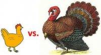 М'ясо індички: користь і шкода