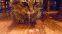 У кота течуть слюні