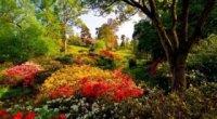 Тіньолюбні рослини для саду