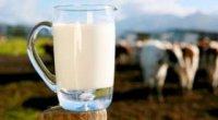 Пастеризоване молоко: корисні властивості, приготування в домашніх умовах