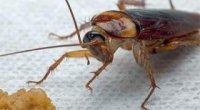Позбавлення від тарганів – способи, засоби, методи профілактики