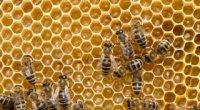 Скільки калорій в чайній ложці меду?