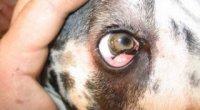 Що робити, якщо собаку рве білою піною?