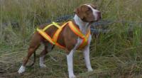 Шлея для собаки своїми руками: викрійка