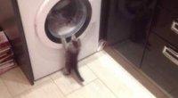 Що робити, якщо пральна машина стрибає при віджиманні?