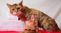 Скільки років кішці за людськими мірками?