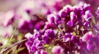 Які квіти, чагарники, овочі посадити в тіні на дачі?