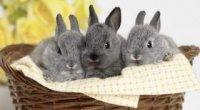 Годівниця для кроликів своїми руками: креслення