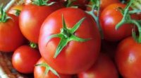 Які сорти томатів для теплиці стійкі до фітофтори?