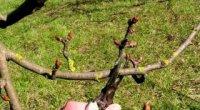 Коли краще обрізати дерева, восени чи навесні?