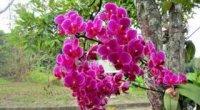 Як реанімувати орхідею