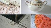 Засіб від мурах вдома: як позбутися непрошених гостей?