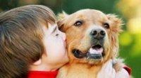 Що робити, як позбутися від алергії на собак, якщо її симптоми проявляються у дитини?