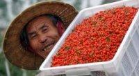 Ягоди годжі – склад і корисні властивості сушених ягід