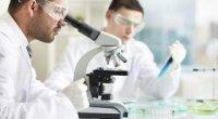 Що показує аналіз на імуноглобулін е?