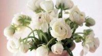 Як зберегти троянди, щоб вони стояли довше?
