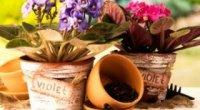 Пересадка кімнатних рослин, чи можна пересаджувати кімнатні квіти восени