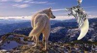 Ікло вовка: амулет, значення, фото