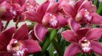 Як поливати орхідею