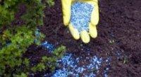 Підгодівля мінеральними добривами навесні