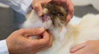 У кота смердить з рота