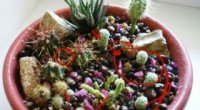 Як посадити кактус без коренів в горщик? Як підготувати насіння і відросток?