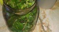 Сік чистотілу — народні рецепти і лікування в домашніх умовах