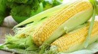 Кукурудза: користь і шкода для здоров'я