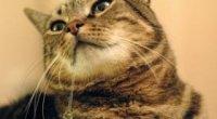 Чому у кішки течуть слюні: ознаки хвороби та отруєння