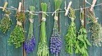 Трави, що знижують апетит і пригнічують відчуття голоду