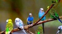 Як навчити папугу розмовляти за 5 хвилин?
