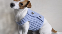 Форма одягу для собак дрібних порід