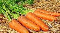 Як зберігати моркву: у підвалі, на балконі, в холодильнику і морозильній камері