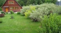 Що посадити на дачі, які квіти, кущі, рослини